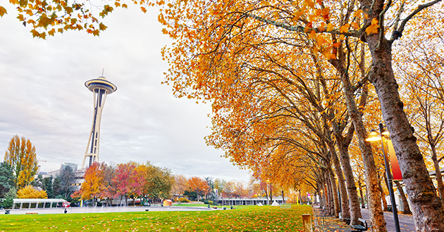 seattle space needle fall